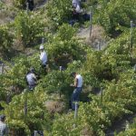 New organic wines from Greece